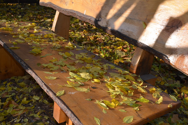 Leaves on a bench