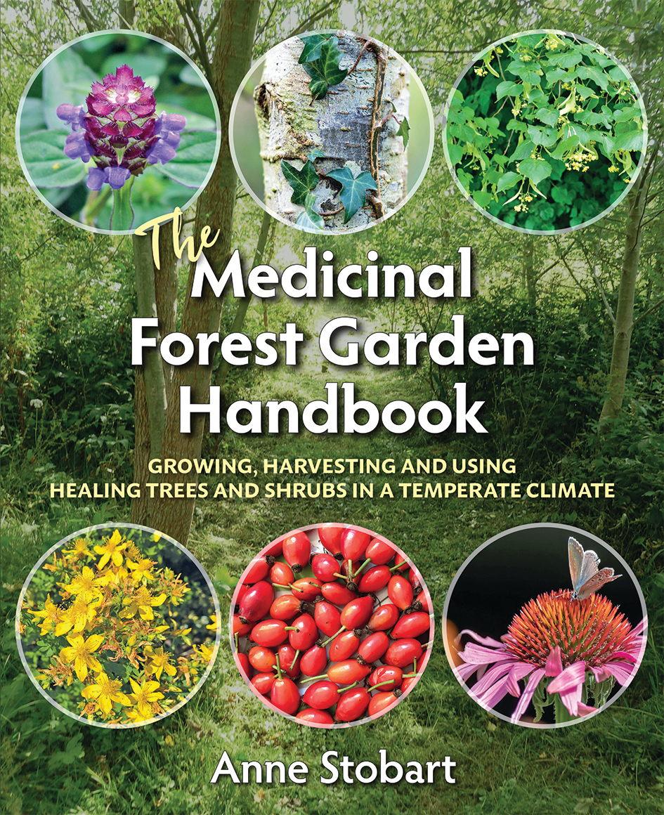 The Medicinal Forest Garden Handbook Anne Stobart cover image