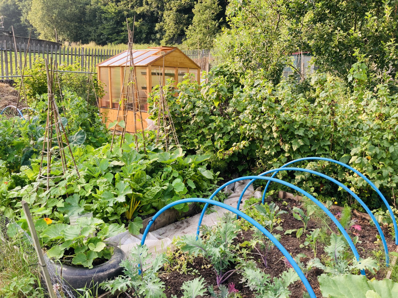 Permaculture allotment